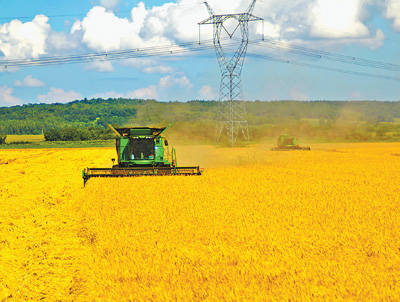 垦区麦收忙