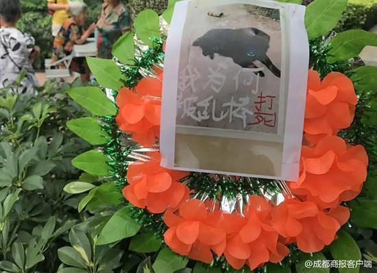 """流浪狗被打死业主挂花圈""""讨公道"""":爱狗举动也应于法有据"""