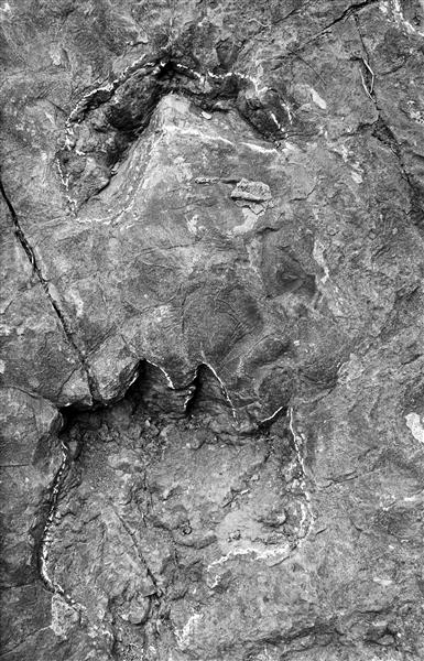 茅台镇现2亿年前大规模恐龙足迹