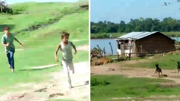 忠诚卫士!印度两黑狗驱赶进村老虎拯救全村人