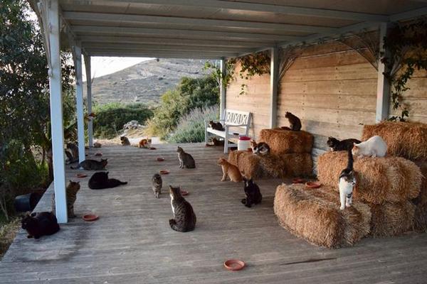 爱猫人士理想工作:孤岛上照顾55只喵星人