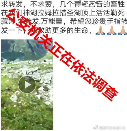西藏有人勒死藏羚羊?警方:疑似岩羊,正在调查