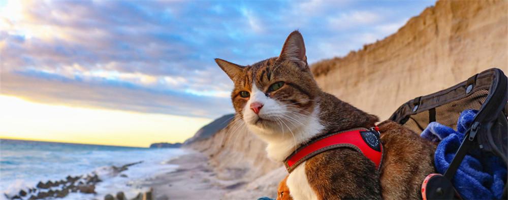 带着猫咪去旅行