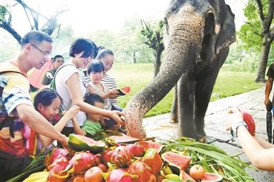 游客给大象过节