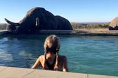 南非大象造访酒店泳池游客惊喜万分