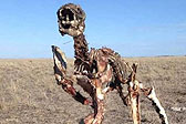 澳严重旱情致袋鼠死亡 农民拍下其完整遗骨