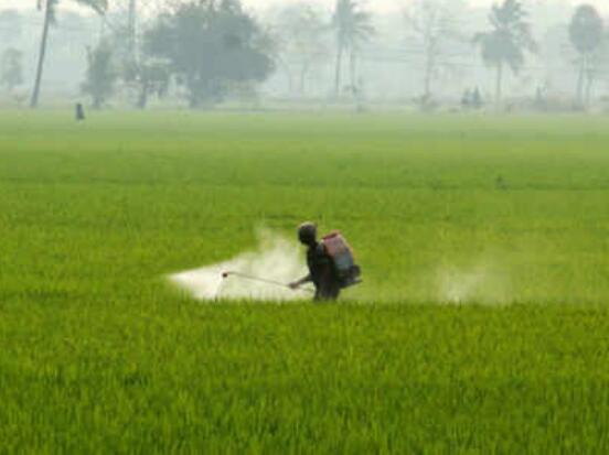 印度政府明令禁止12种杀虫剂的使用