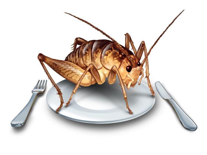 美学者研究称吃蟋蟀可改善人体微生物菌群