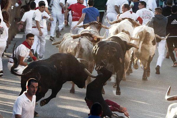 西班牙塔法利亚举行奔牛节 人牛街头追逐大战