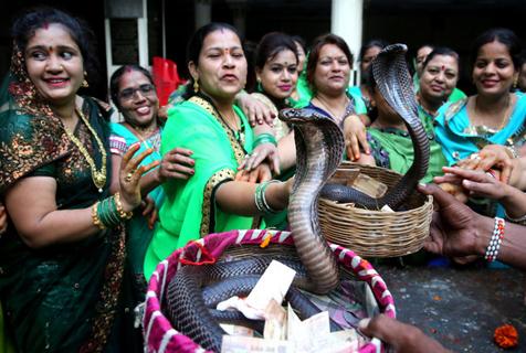 """印度民众迎传统""""蛇节"""" 供奉眼镜王蛇求祝福"""