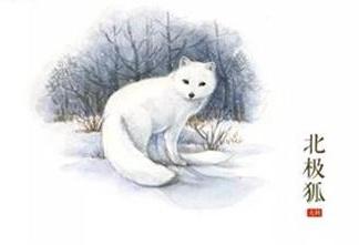 精心绘制!插画师笔下的野生动物