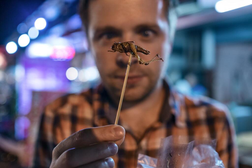 美国研究:食用昆虫助力改善肠道菌群有益健康