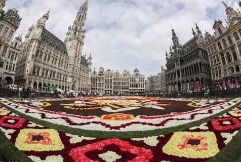 比利时广场铺开一张巨型鲜花地毯 由50万朵花组成