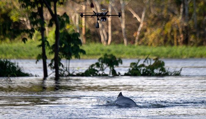 巴西当地采用无人机调查亚马逊河豚的数量