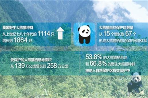 野外大熊猫濒危状况进一步缓解 66.8%野外种群得到严格保护