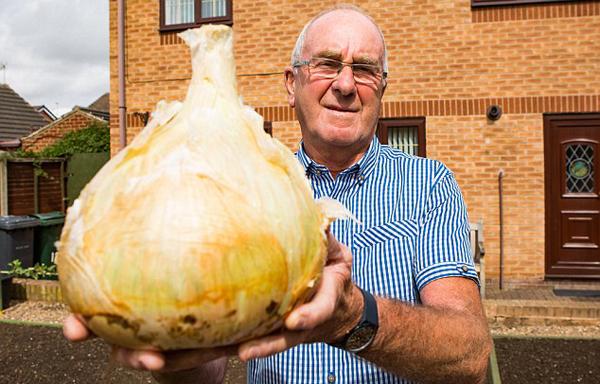 英老人种出9斤重超级洋葱 可供30人食用