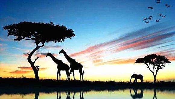 你向往的美景和生活方式 在南非都可以找得到