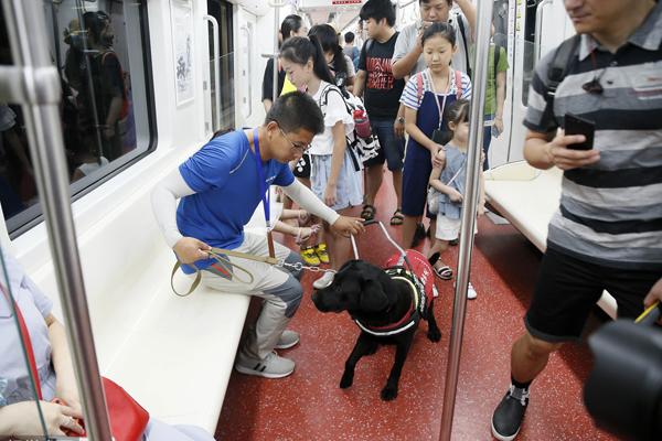 """西安首只导盲犬将服役 进入地铁""""特训"""""""