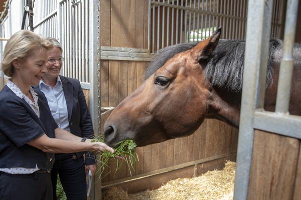 德国女防长参观养马场 喂马吃草照料马驹超有爱!