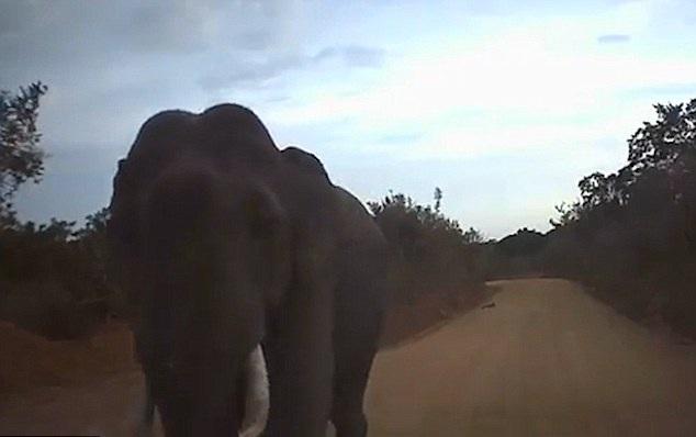 斯里兰卡一大象突袭过路汽车 鼻子打碎挡风玻璃