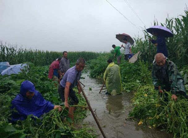 商水县固墙镇积极应对暴雨极端天气