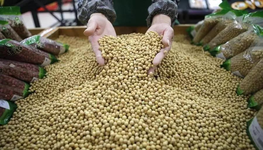关键时刻,俄愿出租百万公顷远东农田帮中国种大豆?