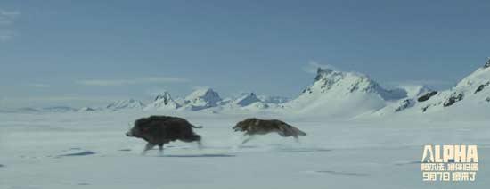 """《阿尔法:狼伴归途》获好评 被赞""""最大惊喜"""""""