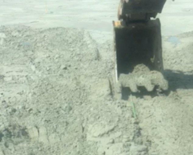 加拿大挖掘机司机作业时发现土壤似波浪起伏