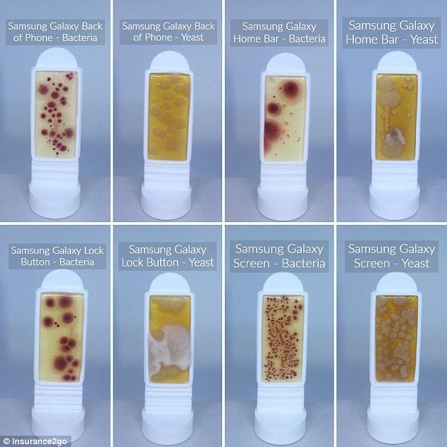 外媒调查发现 智能手机上的细菌是马桶圈的十倍