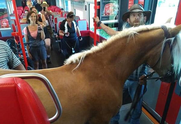 奥地利男子欲携小马乘列车遭拒 被迫下车