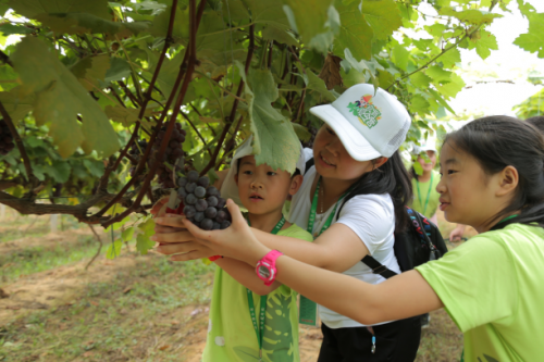 2018九阳食育夏令营:让每一个孩子学会生活