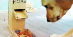 教你如何在家自制宠物自动粮食盒