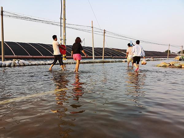 山东寿光被淹:倒塌大棚今年将绝产,供应北京1/3蔬菜