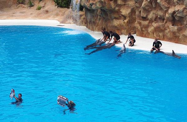 西班牙主题公园海豚表演 动物爱好者下水抵制