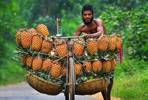 实拍孟加拉国菠萝车夫 一个菠萝仅卖2.4元
