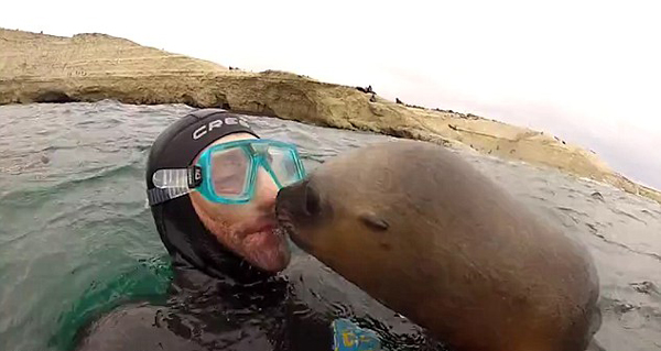羡煞旁人!阿根廷潜水员收获超萌海狮热吻