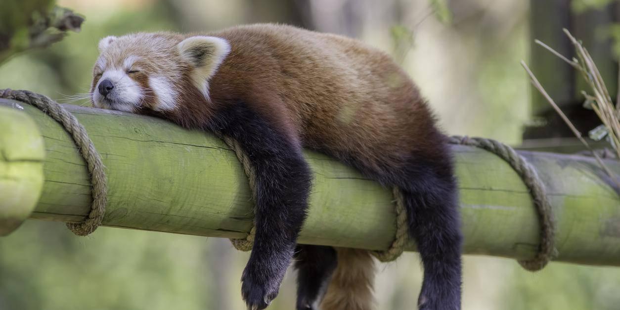 """研究:""""懒惰""""有助于长寿 高代谢率物种更易灭绝"""