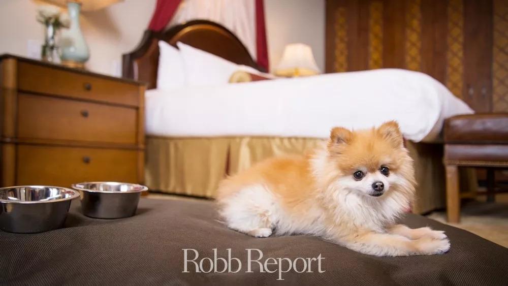 带着狗狗去旅行,最有宠爱的十家酒店