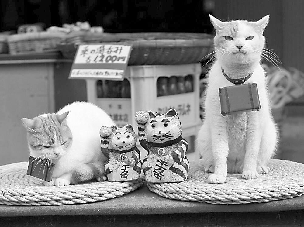 日本人在猫身上找到共鸣