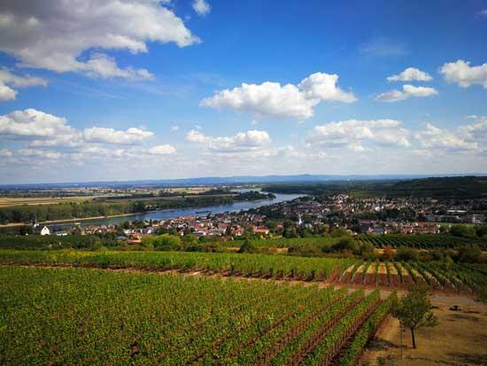 世界顶级的雷司令故乡 红酒酿造也很棒