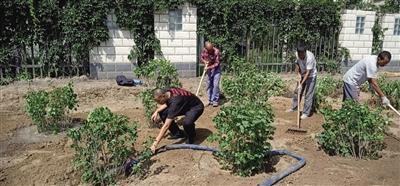【青城眼】补植栽种 防止病虫害 呼和浩特市开启秋季园林绿化养护模式