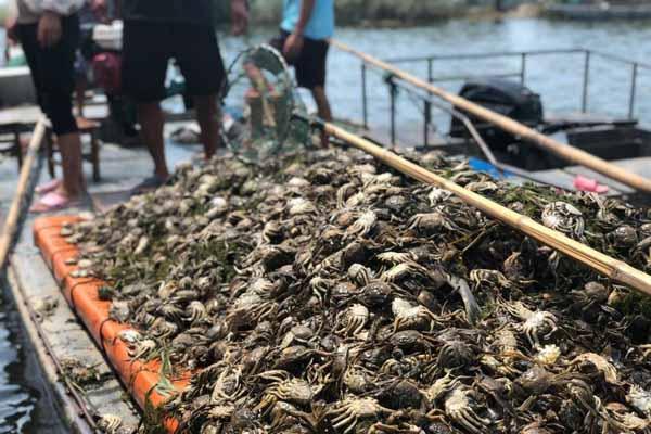 污水过境洪泽湖 12600亩蟹塘几近绝收