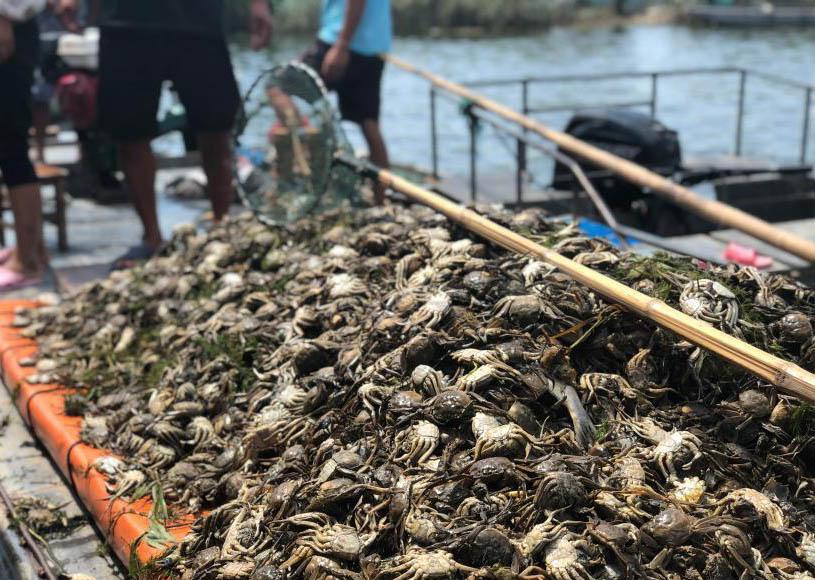 污水过境洪泽湖数万亩水产养殖区受污染 污染源暂未确定