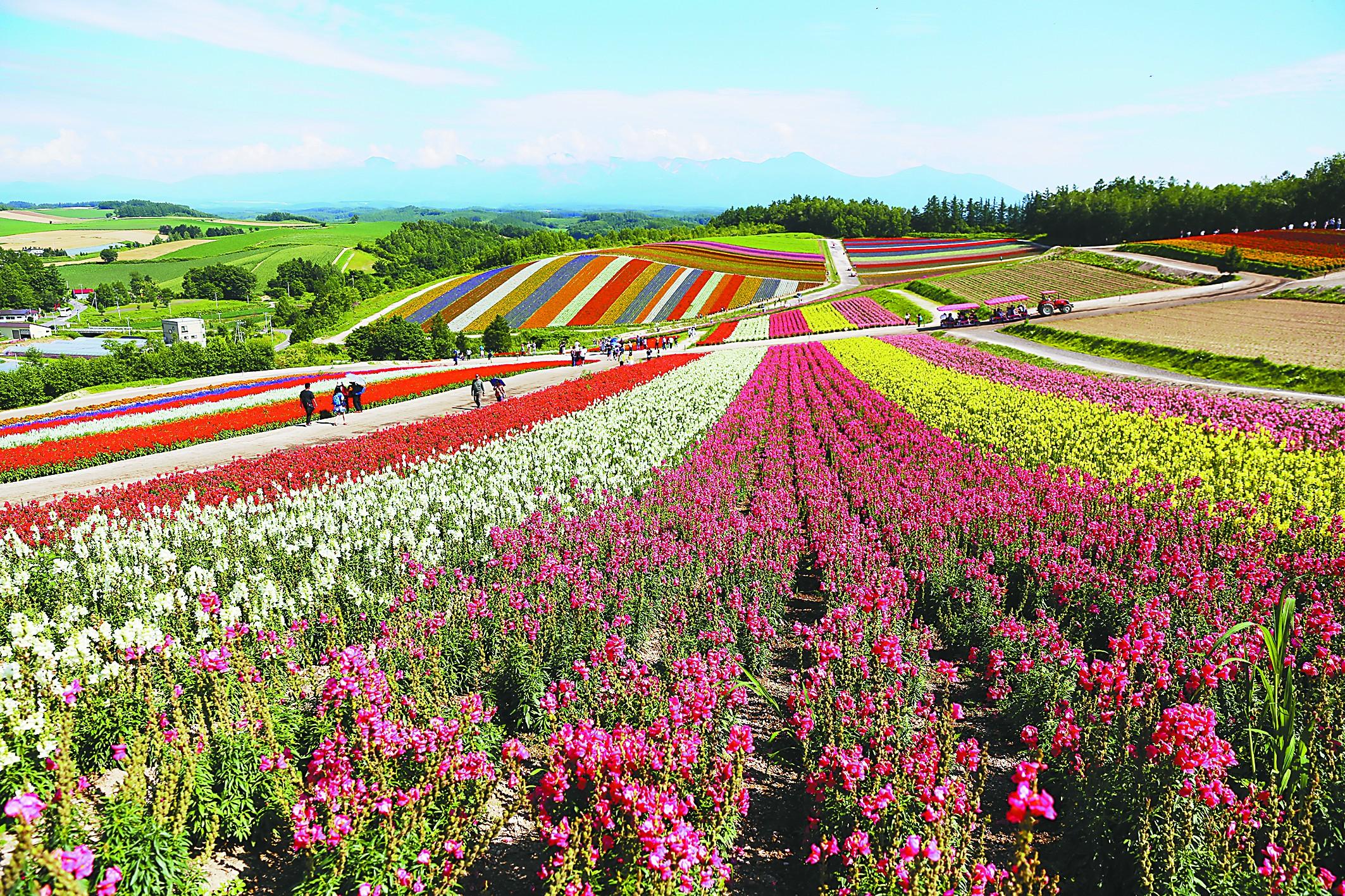 壁纸 成片种植 风景 花 植物 种植基地 桌面 2126_1417