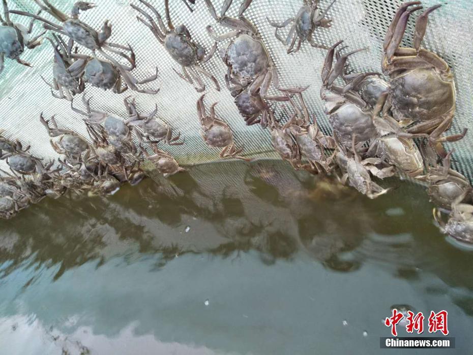 洪沢湖の養殖地が汚染される 汚...