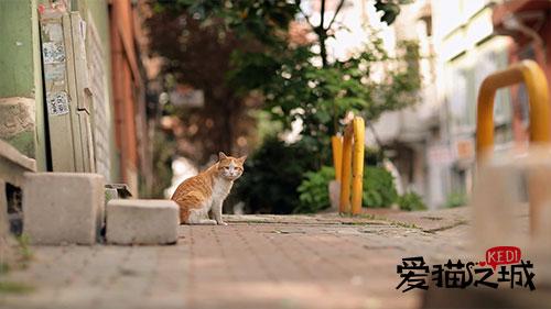 《爱猫之城》曝剧照萌力十足 近期有望上映