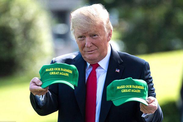 """特朗普将出席竞选集会 秀绿帽子""""让农民再次伟大"""""""