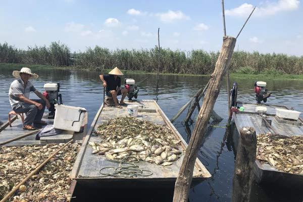 安徽蚌埠鱼蟹大面积死亡 或因上游水污染