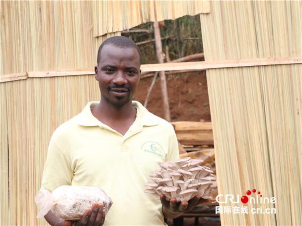 """中国技术给卢旺达送来""""金蘑菇"""""""