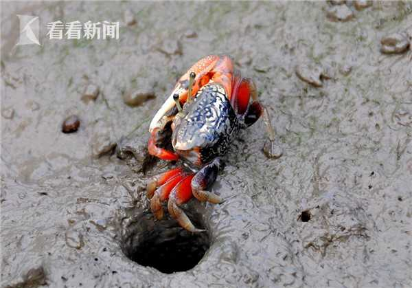 广西: 生态优势金不换